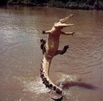 leaping-alligator