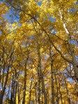 fall_colors6